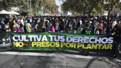 Miles de chilenos marcharon por la regulación del cultivo y uso de cannabis