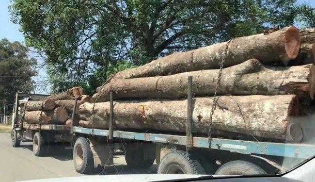 Temor en Vespucio por la deforestación en las serranías