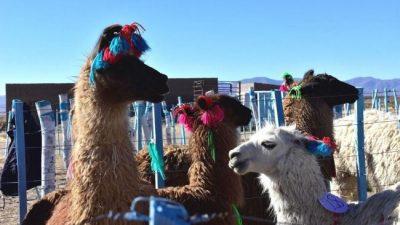 Expo Feria ganadera de Tambillos