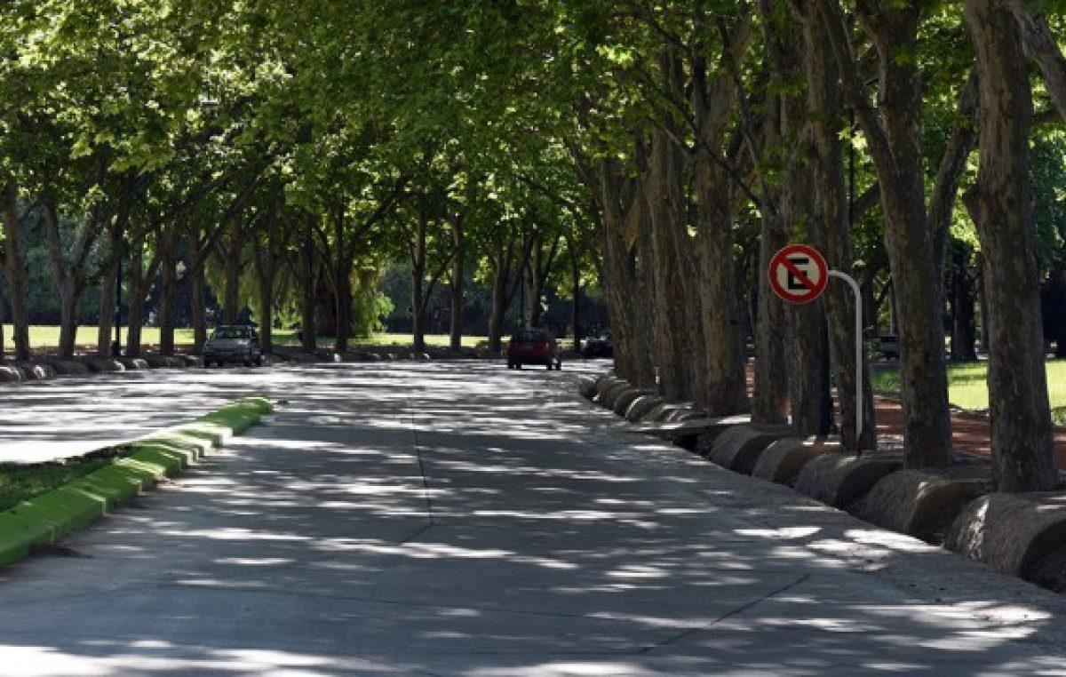 Mendoza: El Unicipio se pone verde, plantarán 25.000 árboles por año
