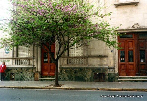 Multas de hasta en $30.000 a vecinos salteños que no tengan árboles en la vereda