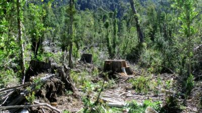Alerta por la deforestación de la Amazonia