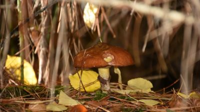 El fabuloso mundo de los hongos de la Comarca Andina