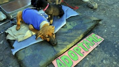 Descuentos en impuestos municipales para quienes adopten mascotas en Anisacate