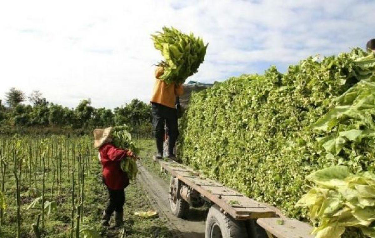 Intercosecha en Valle de Lerma: 7 mil subsidios menos y un drama regional