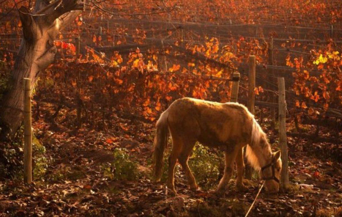 La belleza de Mendoza en el frío otoño