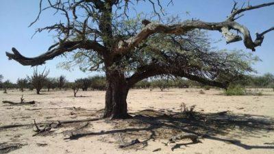 La desertificación condena al Chaco salteño a la pobreza