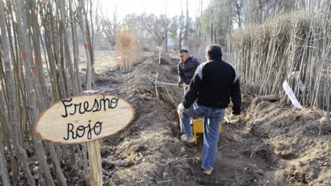 La Muni de Neuquén sale a plantar 4 mil árboles durante todo el mes