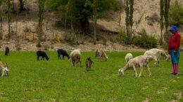 Más de mil pequeños productores salteños se endeudarán sin saberlo