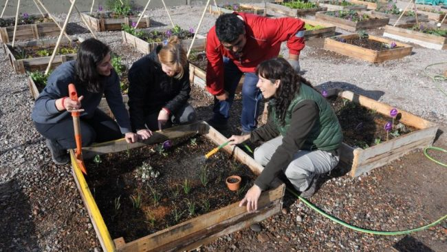 La huerta comunitaria de Godoy Cruz que ya tiene su primera cosecha