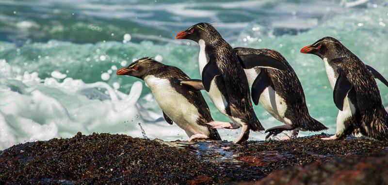 Por la Patagonia y mirando el mar: conocé la Ruta Azul