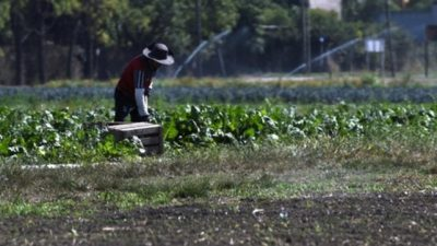 Rosario: Mejoraron su economía y la convivencia con las huertas agroecológicas