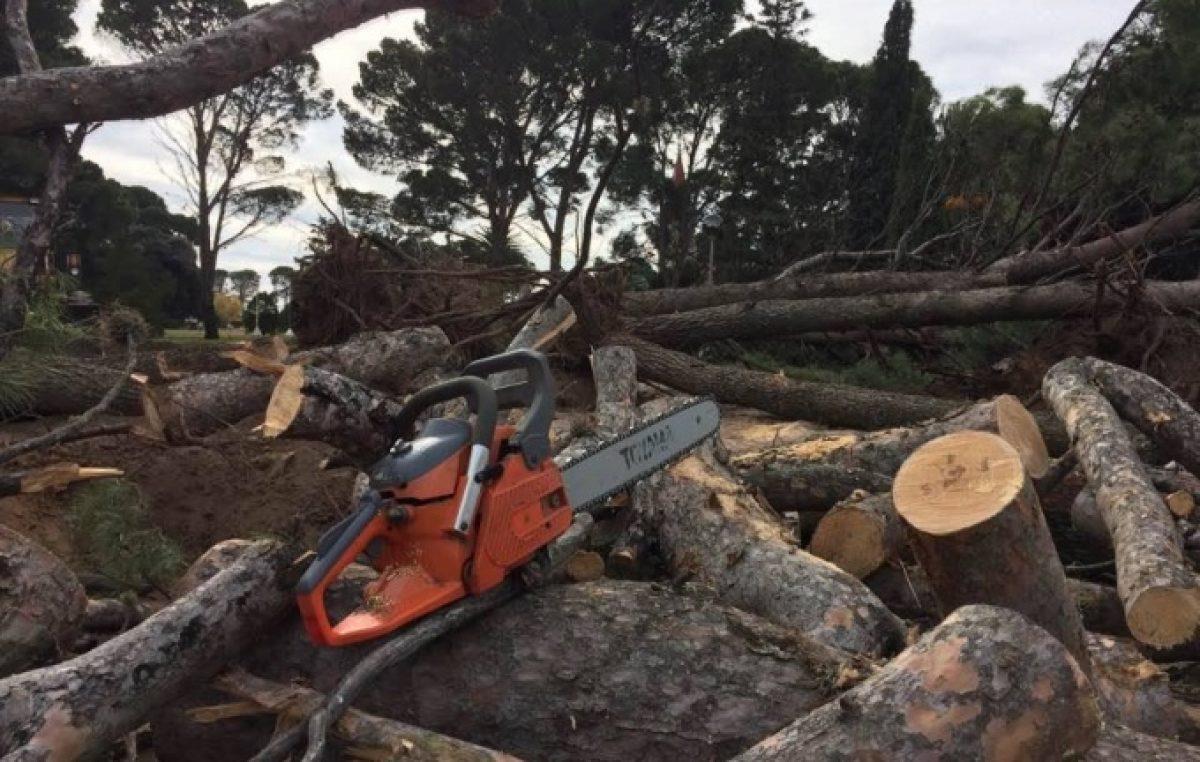 Ecocidio en Tornquist: el intendente taló más de 100 árboles y destruyó patrimonio histórico