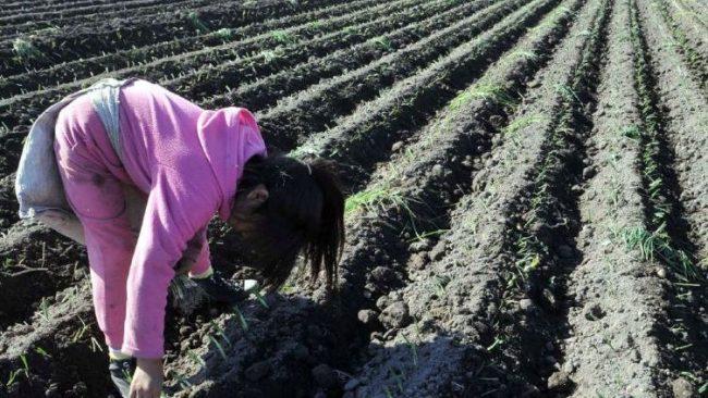 La ley de tu lado: cuáles son las normas que prohíben el trabajo infantil y por qué