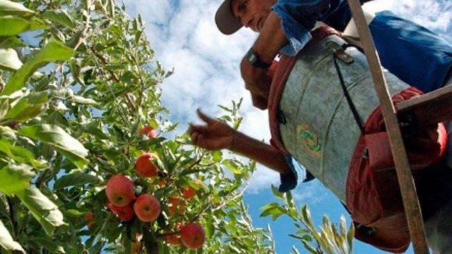 Río Negro: Críticas a Macri por no recibir a productores frutícolas