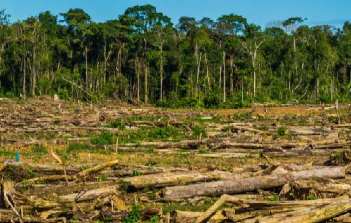 En los últimos 10 años, Entre Ríos perdió unas 135 mil hectáreas por deforestación