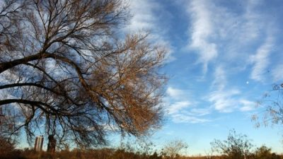 """Río Cuarto: """"La ley de bosques se disfrazó dentro de la ley agroforestal"""""""