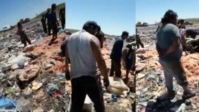 El lado de B de Mar del Plata: en plena temporada, vecinos juntan pollos podridos de la basura