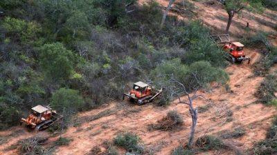 Cerca de 1.000.000 de hectáreas fueron ilegalmente deforestadas en Argentina