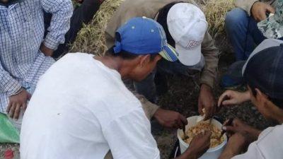 La precariedad laboral rural llega al 49% en la Patagonia