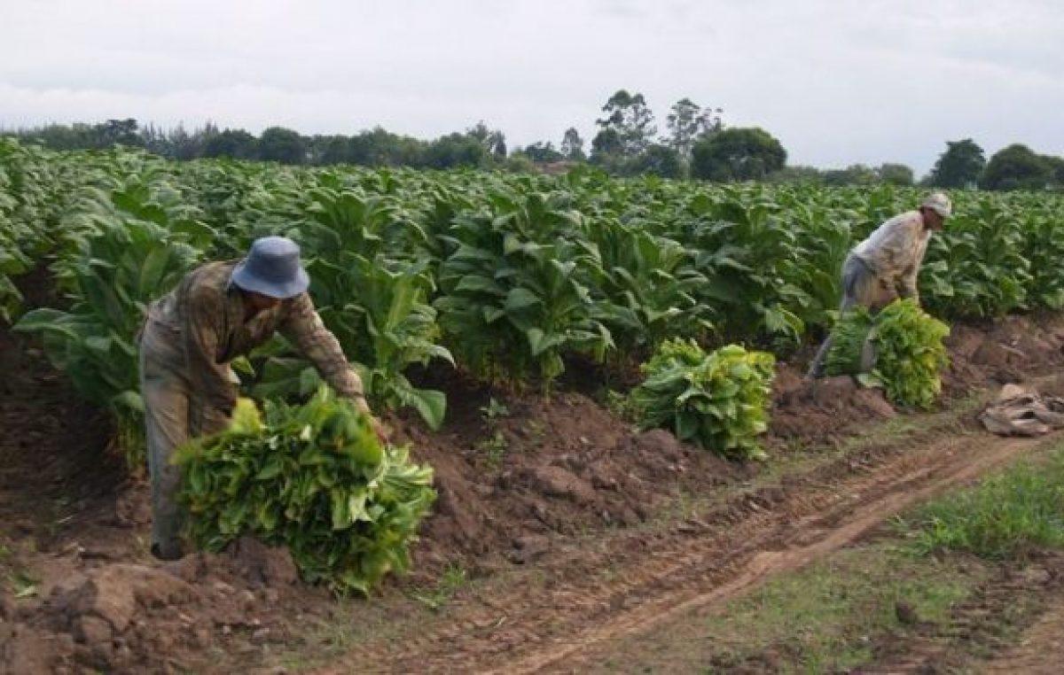 Jujuy: Tabacaleros piden que se declare la emergencia económica en el sector