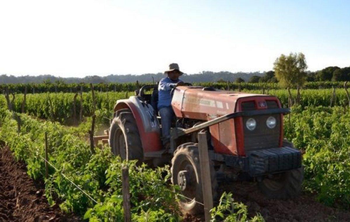 """Cooperativas locales: """"El campo no produce inflación"""""""