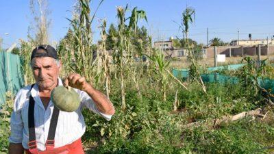 Por la crisis crecieron las huertas familiares en Neuquén