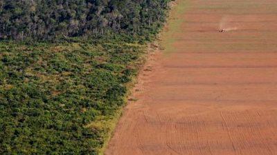 El Amazonia sufre una deforestación feroz