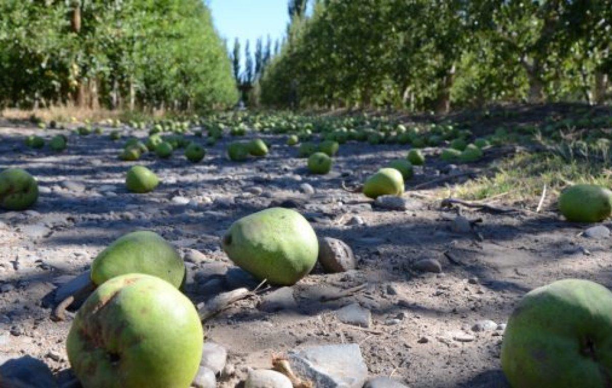 Mar de excusas de la política rionegrina frente al drama de la fruticultura