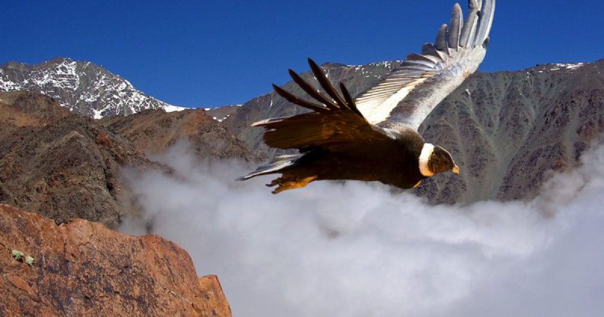 Ecoturismo: cuatro destinos sustentables de Argentina