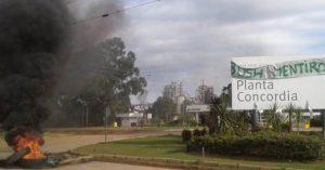 Despidos en la maderera de Concordia: Trabajadores podrían recrudecer las medidas