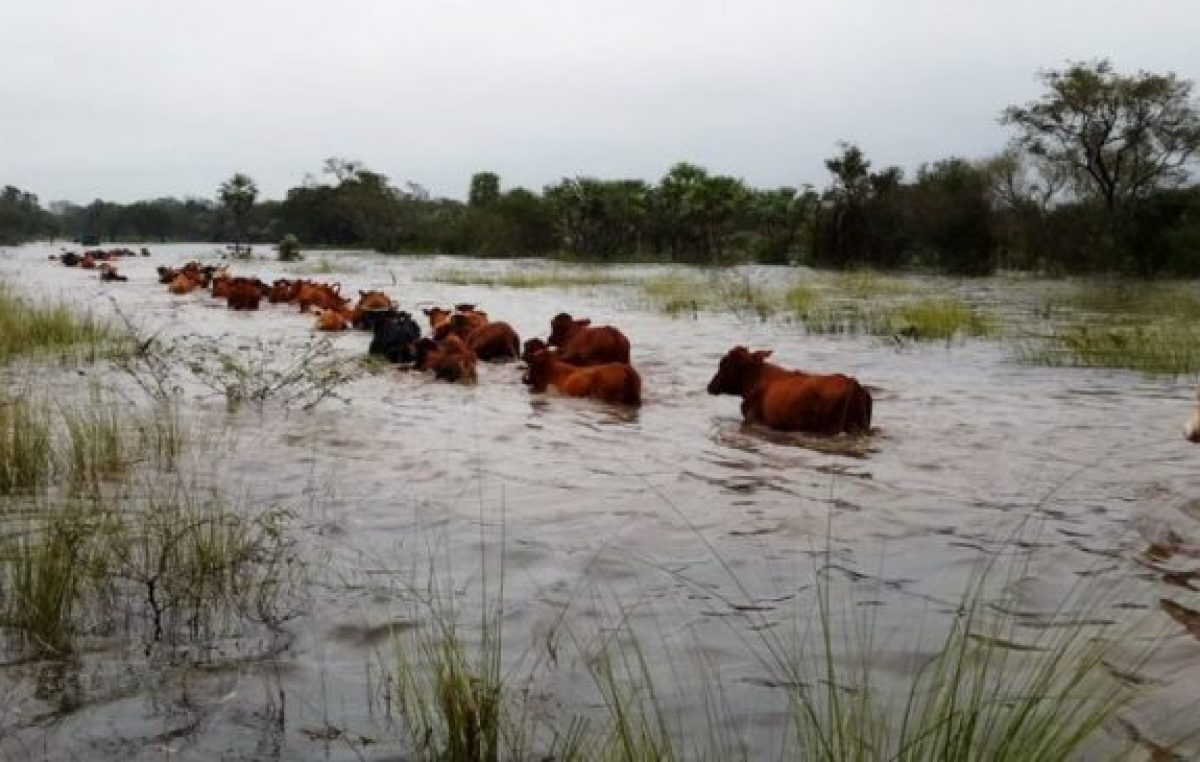 El drama de los productores del norte santafesino que sigue bajo agua
