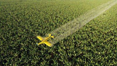 Un fallo de la Corte bonaerense a favor de la agroecología