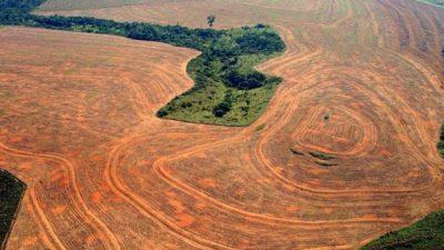 Aumento significativo de la deforestación en la Amazonia brasileña