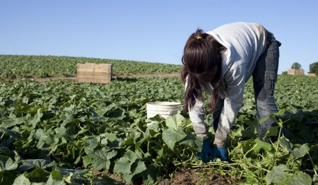 En un año detectaron 62 casos de trabajo infantil en Mendoza y 30% se dan en el agro