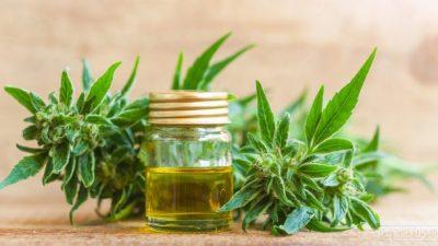 Hurlingham aprobó la producción pública de cannabis medicinal