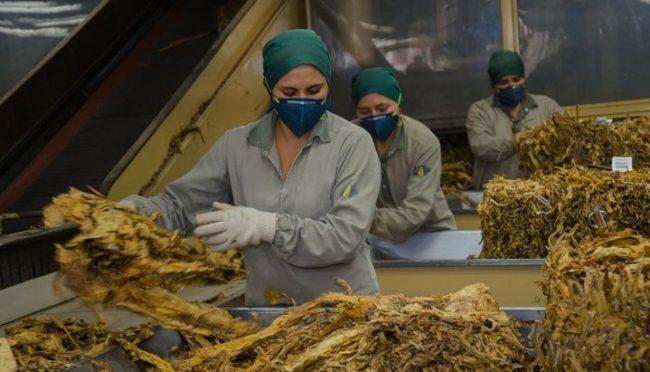 Alarma por el cierre de plantas de tabaco y reducción de personal