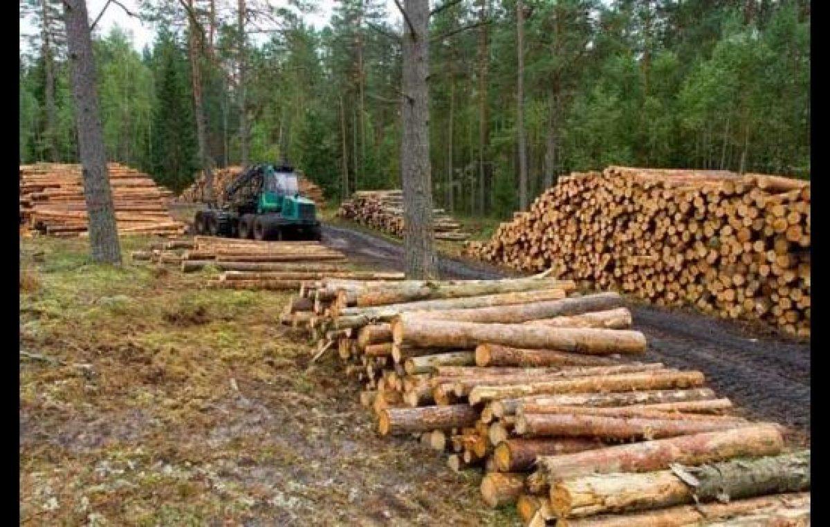 En Brasil la deforestación destruyó 16.100 km2 el año pasado