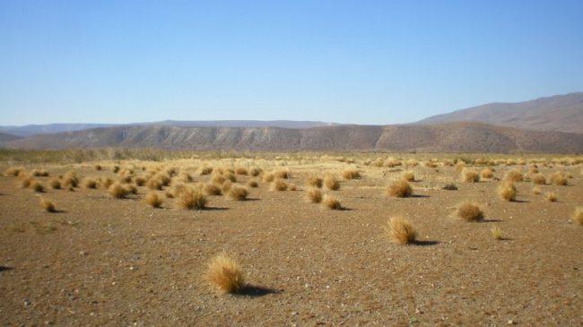 Benetton recibe fondos estatales para forestar en Chubut