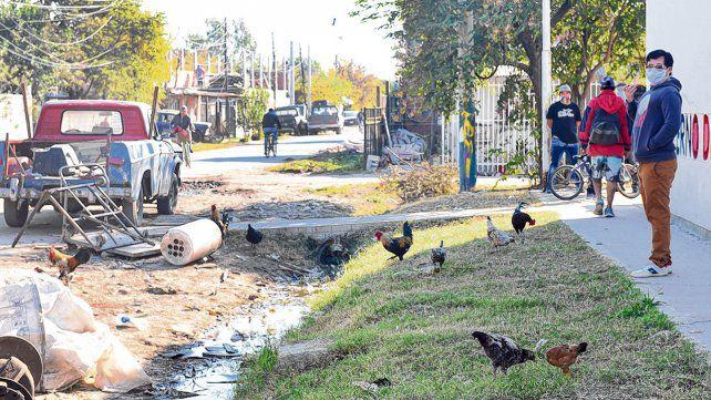Rosario: Una enfermedad que preocupa tanto como la falta de servicios