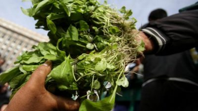 La Unión de Trabajadores de la Tierra dona 6 mil kilos de verduras a comedores