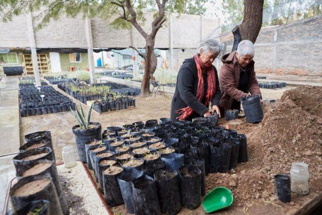 Mujeres recuperan y salvan bosques autóctonos en Mendoza