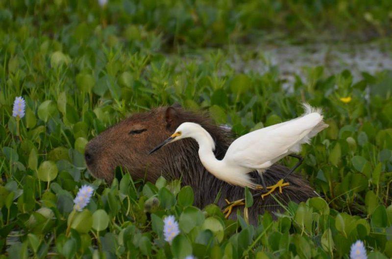 Corrientes: naturaleza, pesca deportiva e integración regional para reactivar el turismo