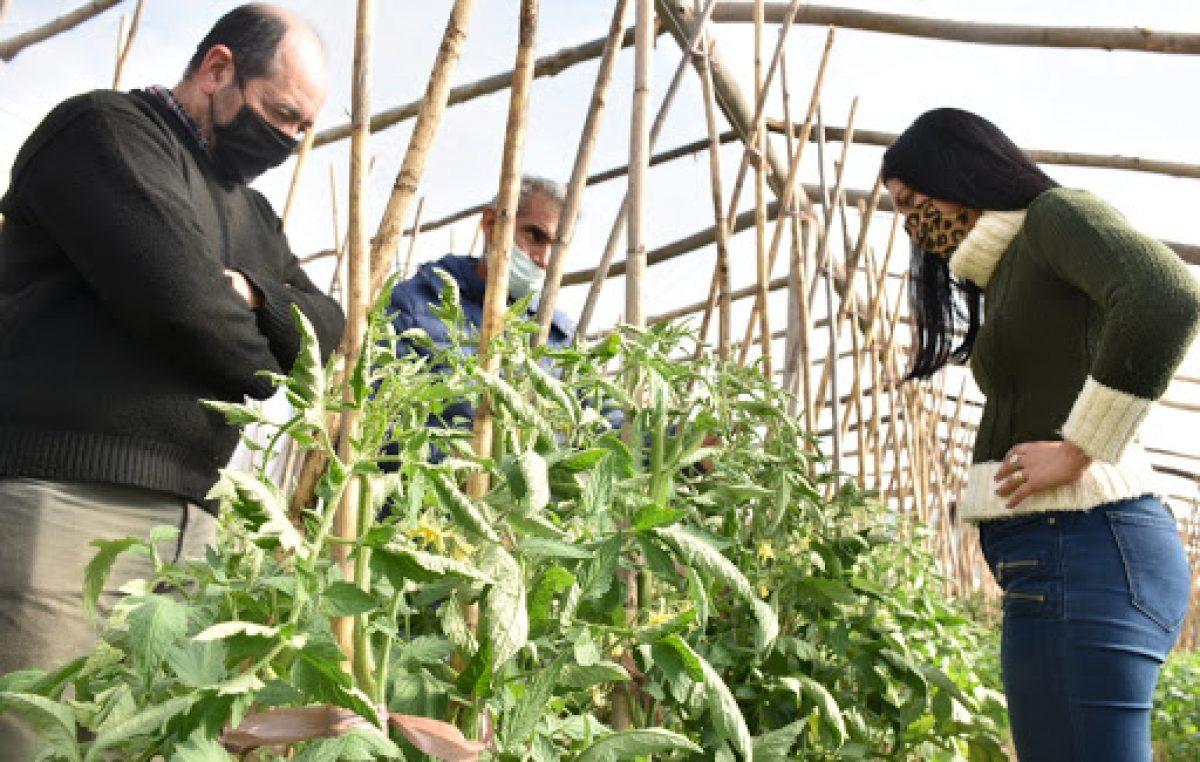Buscan diversificar la producción en Santa Rosa y crearon 6 invernaderos