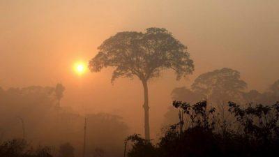 Amazonas en llamas: Brasil registró en junio el mayor número de incendios en 13 años