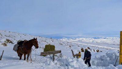 Declaran la emergencia agropecuaria en Río Negro, Neuquén y Chubut