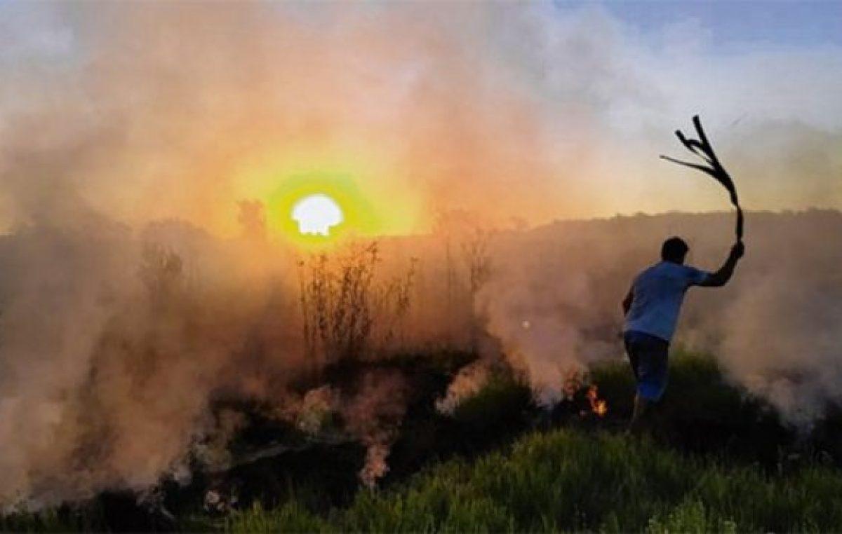 Se quemaron más de 500 mil hectáreas en zona de islas