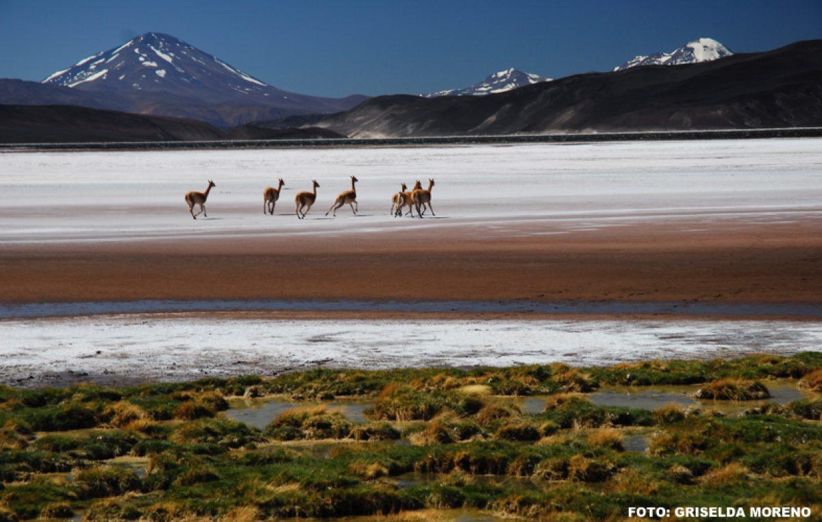 Turismo local: Rincones de Argentina que ningún turista debe perderse