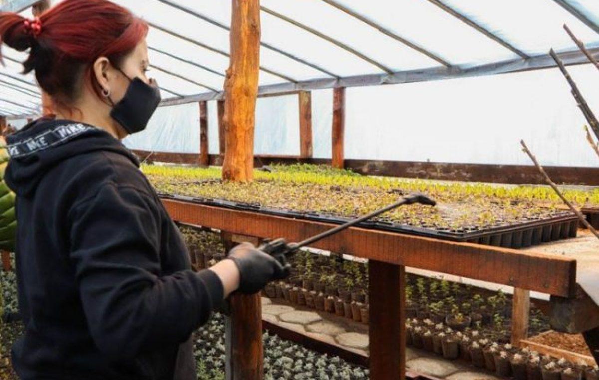 Los viveros municipales de Ushuaia produjeron más de 120 mil plantines y árboles
