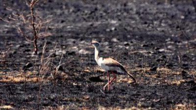 La desolación y la pelea de los bomberos sobre las 60 mil hectáreas que el fuego arrasó en Córdoba